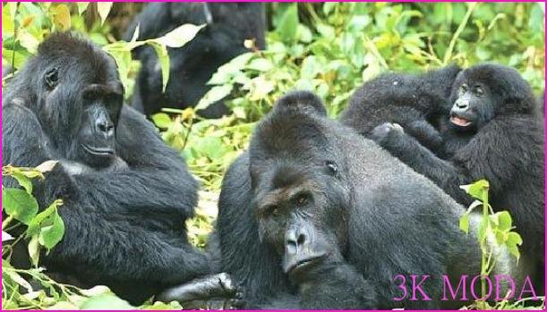 Uganda'da Tatil_10.jpg
